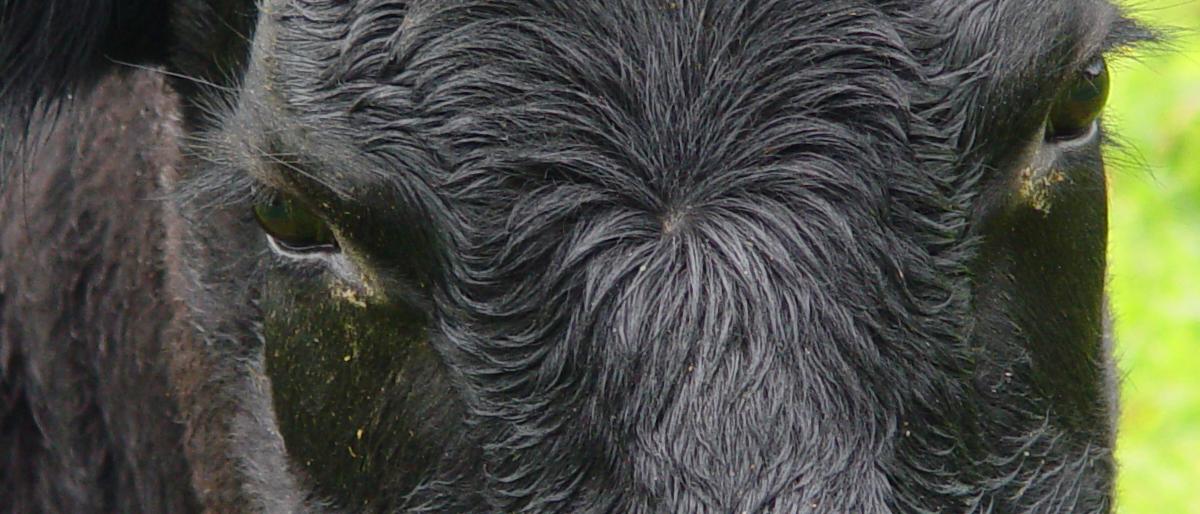 BLACK-ANGUS NATURA-BEEF